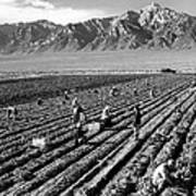 Farm Workers And Mount Williamson Poster
