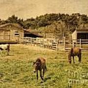 Feral Horses Of Ocracoke Poster