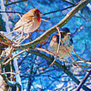 Finch And Blue Jay - California Winter Day Poster
