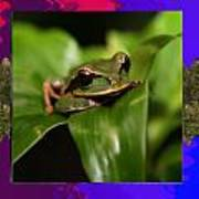Frog Hideous Green Amphibian Poster