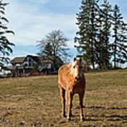 Horse Unbrideled Poster