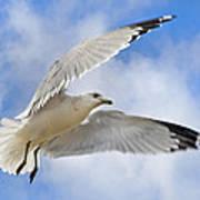 Jekyll Island Seagull Poster