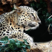 Leopard Watching It's Prey Poster