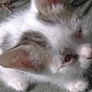 New Kitten's Debut Poster
