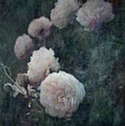 Perennial Gardens - Fall #04 Poster