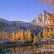 Prusik Peak Behind Larch Trees Poster