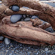 Rocks  In Driftwood Poster