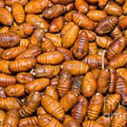 Silkworm Pupae  Poster