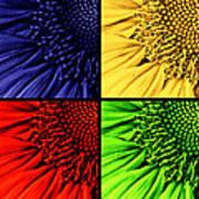 Sunflower Medley Poster