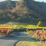 The Hills Of Clos La Chance Winery Poster by Artist and Photographer Laura Wrede