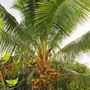 Westmoreland Jamaica 4 Poster