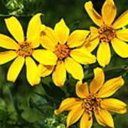 Yellow Texas Wildflowers Poster