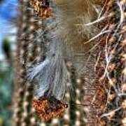 004 For The Cactus Lover In You Buffalo Botanical Gardens Series Poster