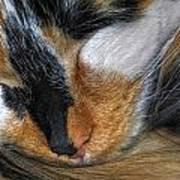 0053 Sleeping Cleo Poster