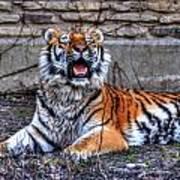 007 Siberian Tiger Poster