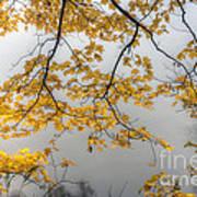 0135 Autumn Gold  Poster