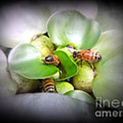 1 . 2 . 3 . Honeybees Poster