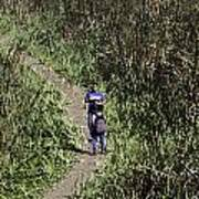 2 Photographers Walking Through Tall Grass Poster