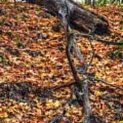 Woods Scene Poster