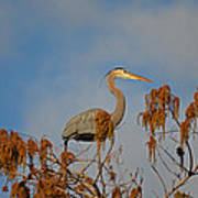 7- Great Blue Heron Poster