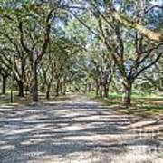 Lowcountry Allee Of Oaks Poster