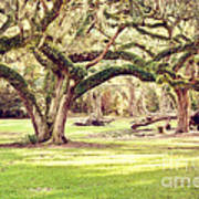 Ancient Oaks Poster