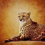 Animal Portrait Poster