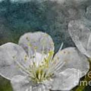 Apple Blossom Photoart Vi Poster