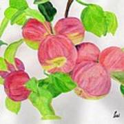Apples Poster by Bav Patel