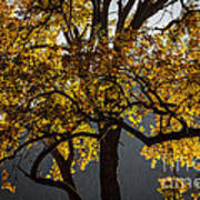 Autumn Abstract Poster