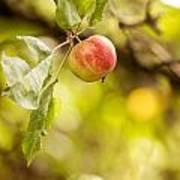Autumn Apple Poster