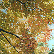 Autumn Branches Poster