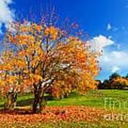 Autumn Fall Landscape Poster