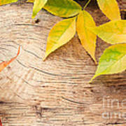 Autumn Forest Background Poster