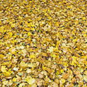 Autumn Leaves Poster by Michal Boubin