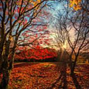 Autumn Shadows Poster