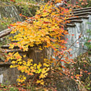Autumn Steps Near Smalls Falls In Maine Poster