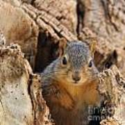 Baby Fox Squirrel Poster