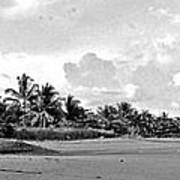 Beach Of The Iguana Bw Poster