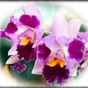Beautiful Array Of Purple Butterfly Orchids Poster