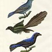 Beautiful Foreign Birds Poster