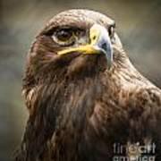 Beautiful Golden Eagle Portrait Poster