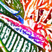 Bird of Paradise Painted Poster