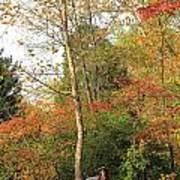 Blanket Of Leaves Poster