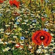 Blossoming Meadow Poster