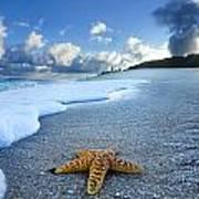 Blue Foam Starfish Poster