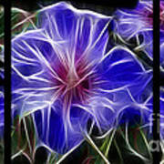 Blue Hibiscus Fractal Poster