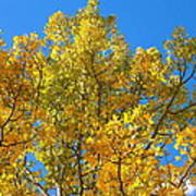 Blue Skies And Golden Aspen Trees Poster