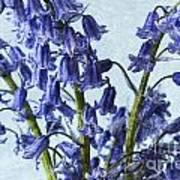 Bluebells 2 Poster