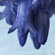 Bluebells 4 Poster